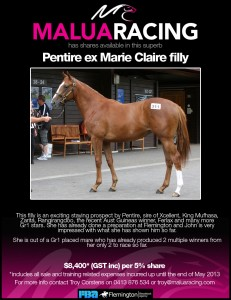 Pentire ex Marie Claire filly2