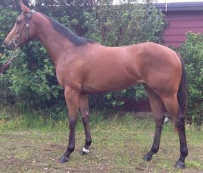 Nicconi filly