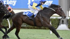 Western Australian bred and owned star Black Heart Bart added a second win at racing's elite level when he stormed to victory in the Group One Memsie Stakes (1400m) at […]