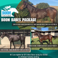 Racehorse Syndication, Breeding and Beers – Plenty happening at BRT   There has been plenty going on at BRT with our yearlings progressing well, the excitement in the air around […]