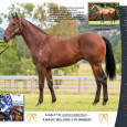 Matty Dunn has secured a nice colt with a Stallions pedigree, here is a bit of info for you all. http://matthewdunnracing.com.au/stable/news/id/28346/here-s-your-chance-to-race-a-fastnet-rock-colt-by-the-dam-of-unencumbered