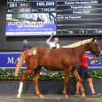 A flashy filly from the first crop of former top grade sprinter Russian Revolution topped Day Two as the 2021 Magic Millions Gold Coast March Yearling Sale came to a […]